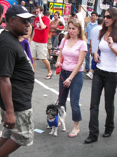 Dog at Adams-Morgan Day