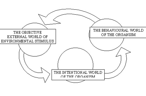 social ecologial model theory Bronfenbrenner's bioecological model of development (bronfenbrenner) 7 months ago • constructivist theories , learning theories & models , social learning theories • 0 bronfenbrenner's bioecological model is a theory of educational psychology that studies human development over time.