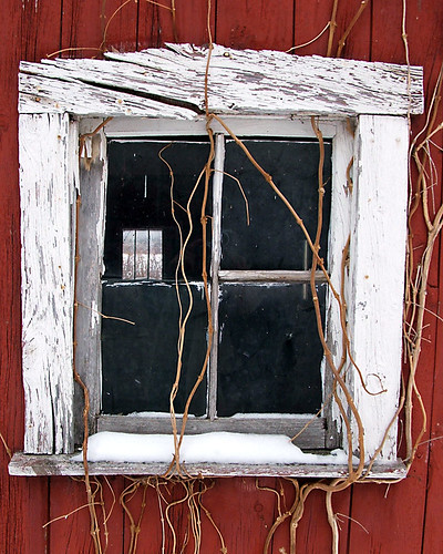 window by Aunt Owwee
