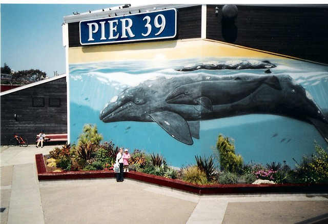 Melissa Maddie Pier 39 The Aquarium Of The Bay San