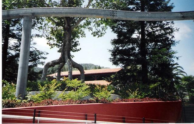 Circus Trees Bonfante Gardens Gilroy Ca Flickr