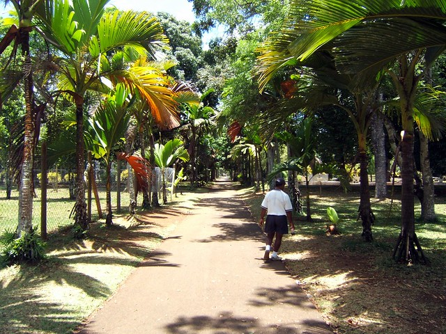 Gardens pamplemousses mauritius flickr photo sharing for Gardening tools mauritius