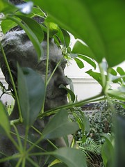 bust of a unknown man hidden behind leaves in the garden of the Museo de Arte Hispanoamericano Isaac Fernandez Blanco in Buenos AIres. The museums garden is one of the most beautiful spots in Buenos Aires. ideal to read a book in the afternoon sun...