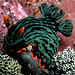 Dusky Nembrotha - Photo (c) Nick Hobgood, some rights reserved (CC BY-NC)