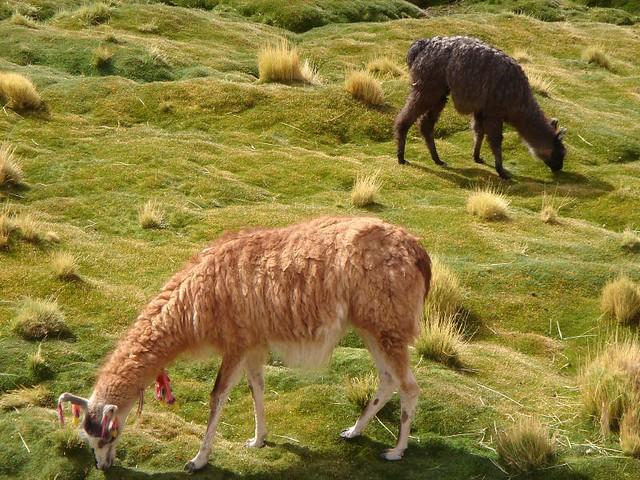 8 Paisajes De Chile Que Parecen De Otro Planeta Taringa