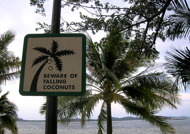 coconuts...the silent killer