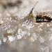 Bee-inn by Rob Blanken (www.rbblphotography.com)