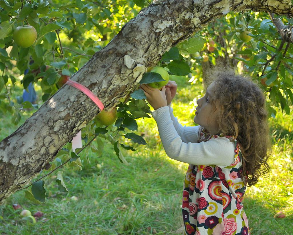 Poverty Lane Apple Picking
