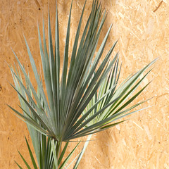 arecales, agave, leaf, tree, plant, herb, flora, agave azul,