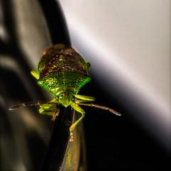 »Kuckuck!« Ein nächtlicher Besucher auf meinem Wasserglas... :-) »Cuckoo!« A night visitor on my water glass. . .