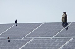 solar panel, wing, solar energy, roof, solar power,