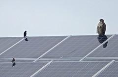 floor(0.0), daylighting(0.0), outdoor structure(0.0), solar panel(1.0), wing(1.0), solar energy(1.0), roof(1.0), solar power(1.0),