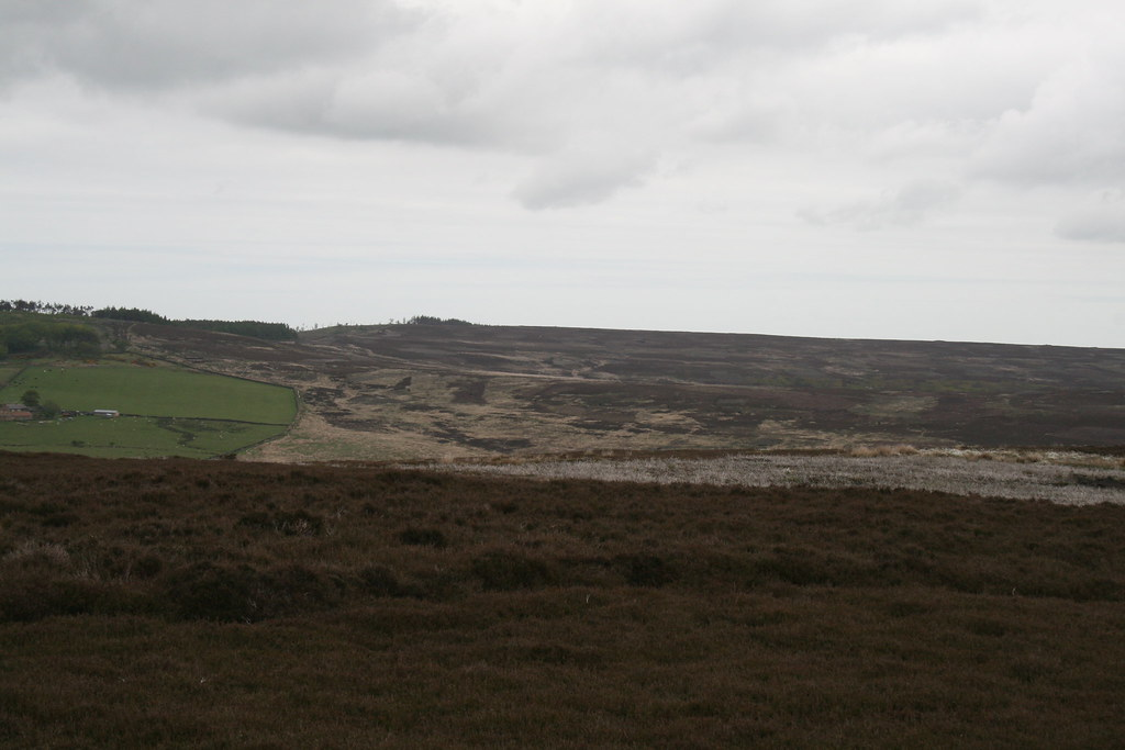 Gisborough Moor from Great Ayton Moor