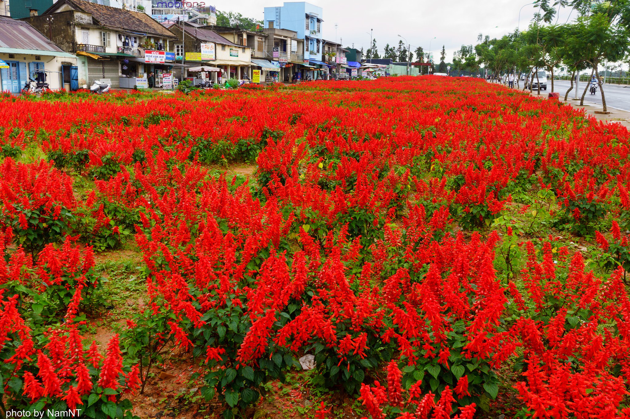 19359260048 20614599f7 k - [Phượt] - SG-Cổ Thạch- Nha Trang- Đà Lạt: ngàn dặm mua hạt é cho người thương