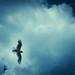 rainny sky by Mary Ownberry