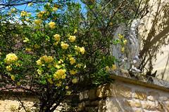 Le gardien des fleurs - Photo of Clermont-d'Excideuil