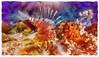 Lionfish Roar