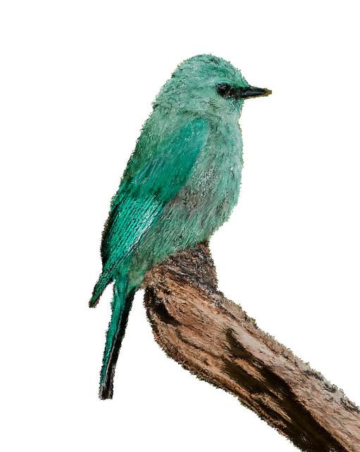 Koshy shore bird01