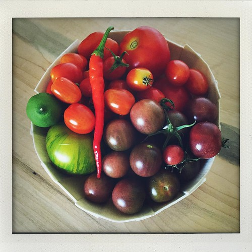 Picked more tomatoes & a pepper today - the bowl is full... Now, what should we make with all of these?