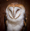 Barn Owl by Photography And Artwork of Melissa McCarthy