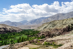 Ladakh is largely high altitude desert pockmarked with green where glacier melt flows down to the valleys