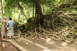 Cool tree on the Elephant Cave property