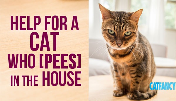 cat-pees-in-house