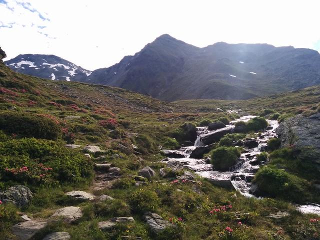Herrliches Panorama mit Almrosen und Bergbach