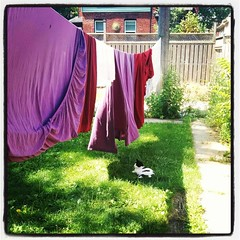Best shade in town... Queenie knows this. #catsofinstagram #walkervilleON #gogreen #laundryday