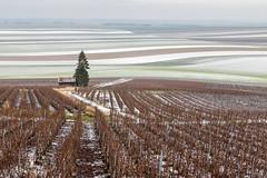 the champagne area in winter