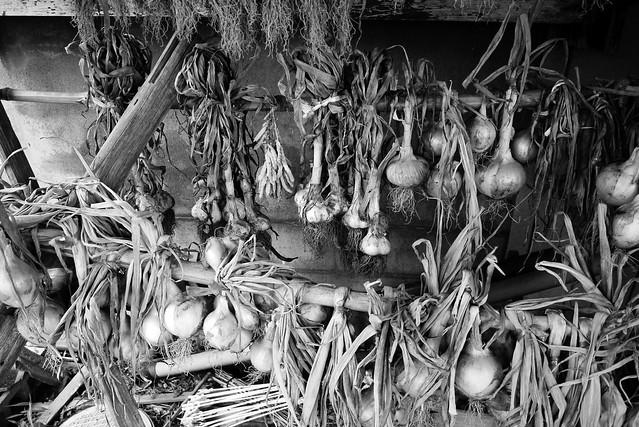 玉葱と大蒜