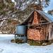 Hiding in amoungst the Snowgums ........ by John Finnan
