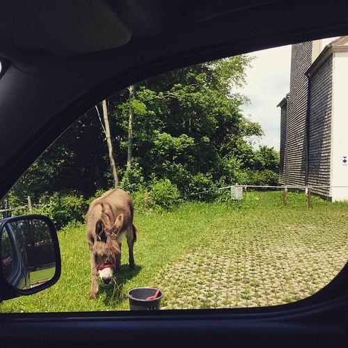 #donkey #esel