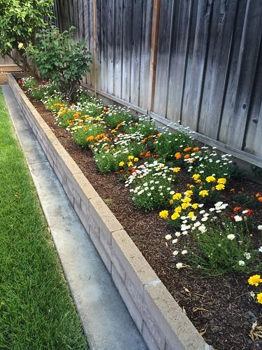 Our garden  Spring 2015