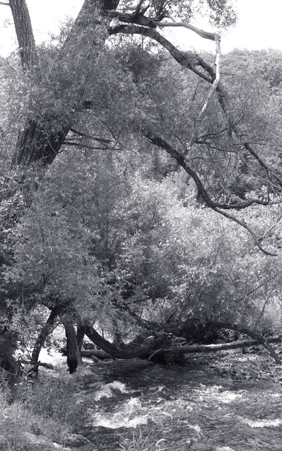 Riverside WillowII