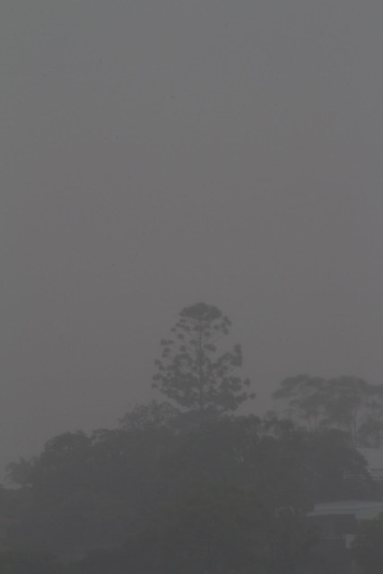 Tree in the rain, Canon EOS KISS X6I, Tamron AF 18-270mm f/3.5-6.3 Di II VC PZD
