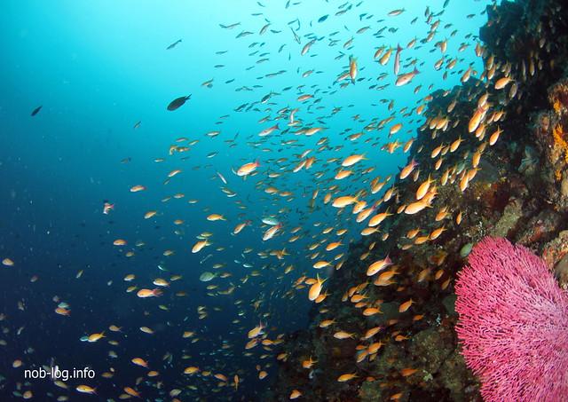 金魚とウチワ