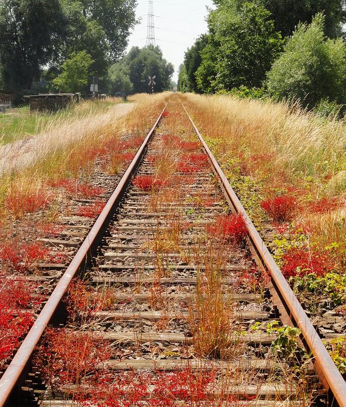 Commute to summer job