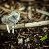 Mushroom #5