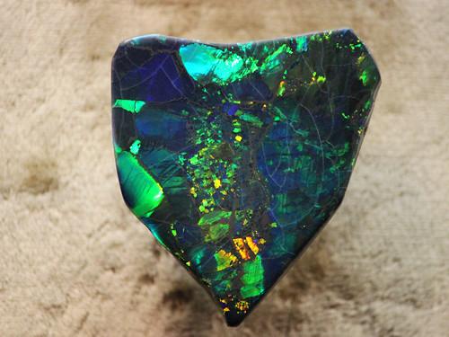 Harlequin Prince Opal