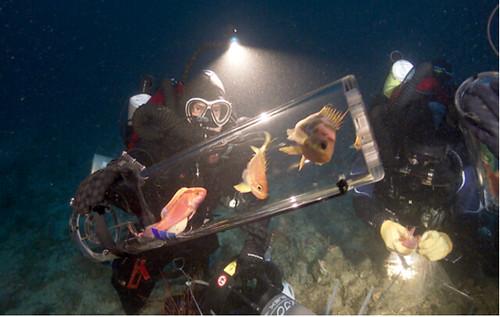 微光區作業照,利用特殊的減壓裝置將微光區生物帶回陸上。 圖片來源: California Academy of Sciences