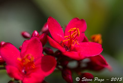 ~ Red Blooms 1 ~