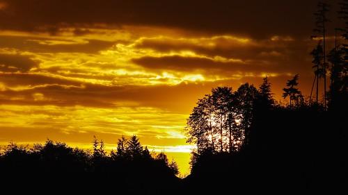 cloud sun plant canada tree sunrise landscape dawn pentax britishcolumbia porthardy k20d smcpentaxda300mmf4edifsdm nigeldawson jasbond007 copyrightnigeldawson2015