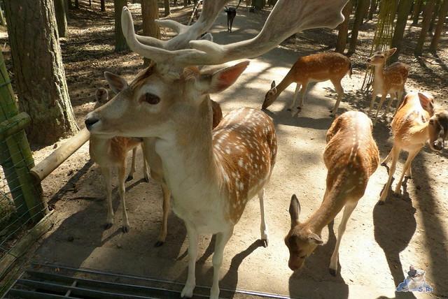 Tierpark Perleberg 09.08.2015 47
