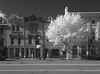 Infrared Georgetown
