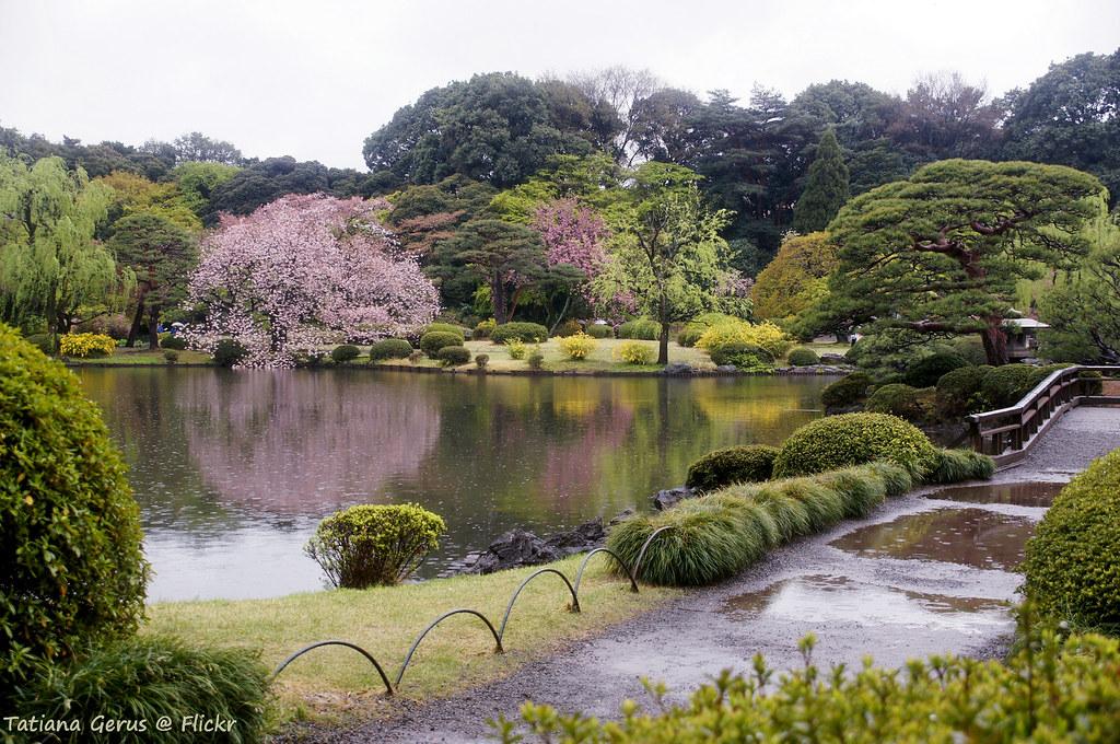 Rain in Shinjuku Gyoen National Garden