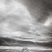 Alone by MattWalkleyPhotography
