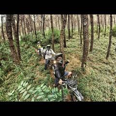 Banyak jalan bercabang 2 di Gunung Panderman. Dan hampir setiap jalan yang kita ambil buntu. Contohnya ini, jalur salah yang ngebawa kita masuk ke dalam hutan, yang akhirnya harus muter balik.
