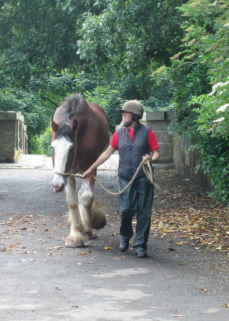 Pollok House horse