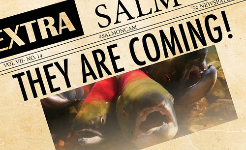 Salmon Cam Poster